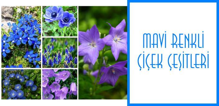 mavi renkli çiçek çeşitleri