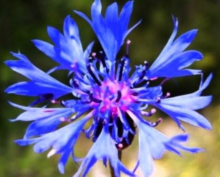 mavi renkli bitkilerimiz