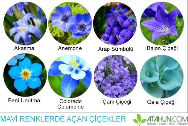 mavi renkli çiçeklerin isimleri