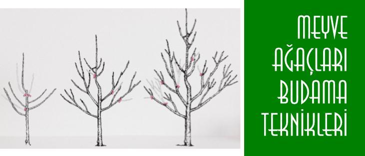 Meyve Ağacı Budama Teknikleri