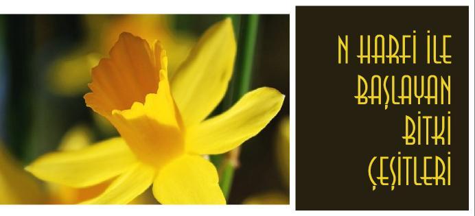 N ile başlayan bitki isimleri nelerdir?