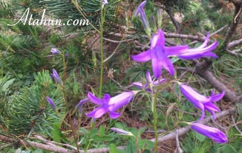 rize bitkileri