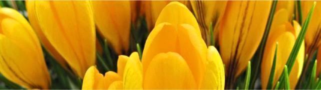 s il ebitki çiçek