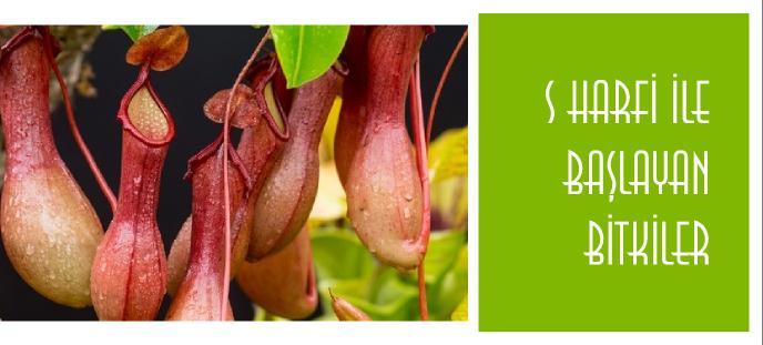 s ile bitki adları