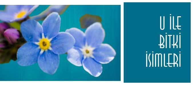 u ile çiçek isimleri