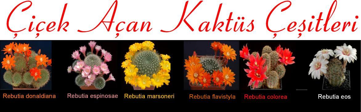 çiçek açan katüs çeşitleri isimleri
