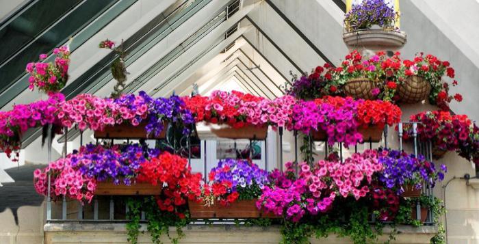 Balkon bahçesi nasıl yapılır