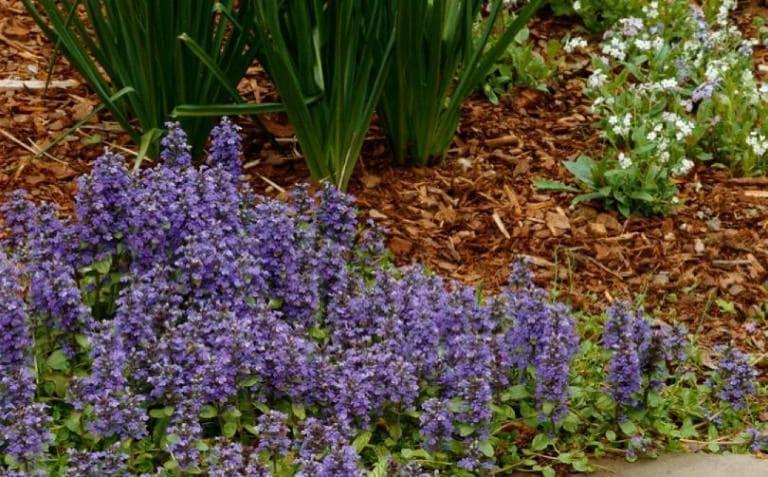 Gölgeli Bahçelerde Hangi Bitkiler Kullanılır