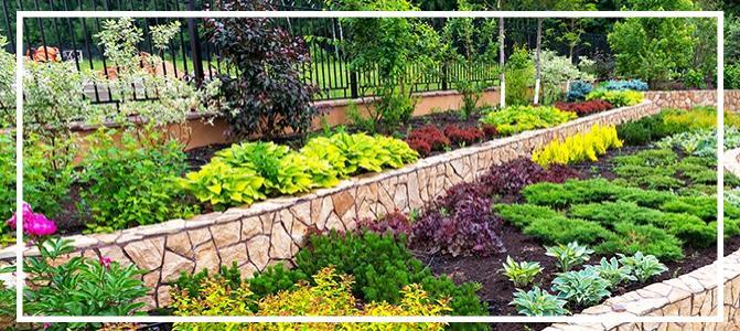 Peyzaj alanında kullanılan yer örtücü bitki türleri