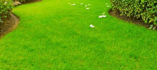 aylık çim bakım takvimi