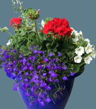 balkon saksı çiçekleri