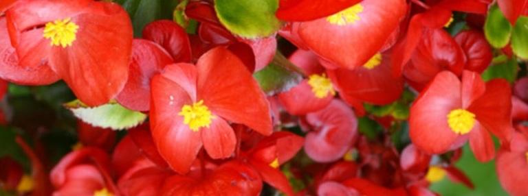 uzun çiçek açan bitki
