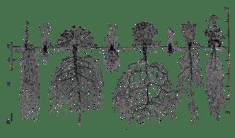 bitki kökü çeşitleri