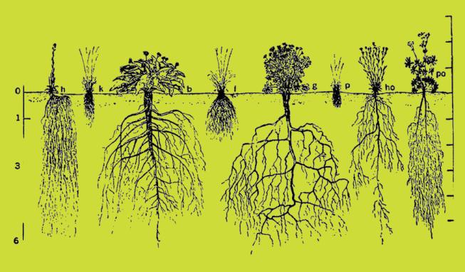 bitki kökleri