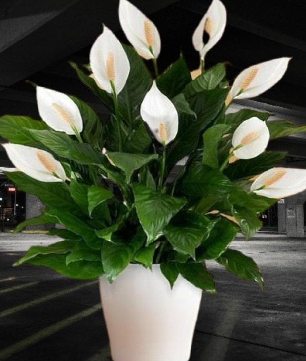 cam saksıda yetişen çiçek isimleri