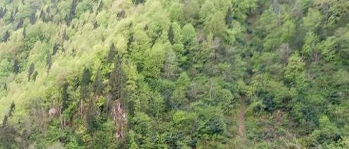 çatalca ağaçları