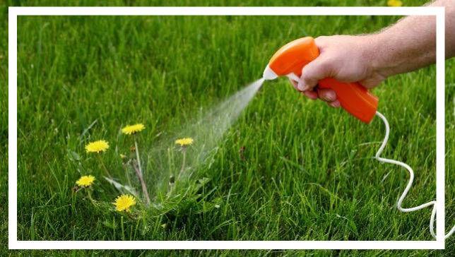 çimlerde yabani ot temizleme