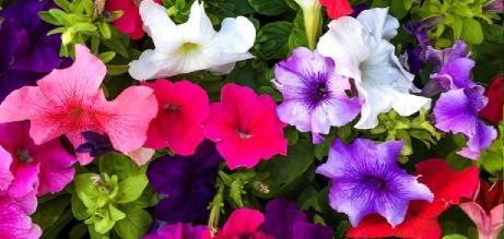 En güzel kokulu çiçek hangisi, Parfüm kokulu çiçekler, Cennet kokulu çiçekler, Akşamları güzel kokan çiçekler, Evi güzel kokutan çiçekler, Gece güzel kokan çiçek, Güzel kokulu bitki isimleri, Güzel Kokan saksı çiçekleri, Güzel kokulu bitki isimleri