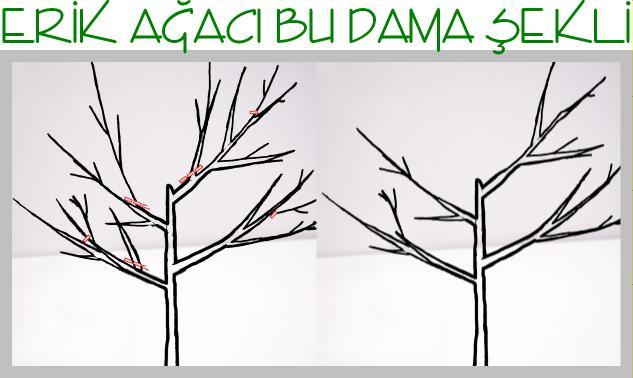 erik ağacı hangi ayda budanır