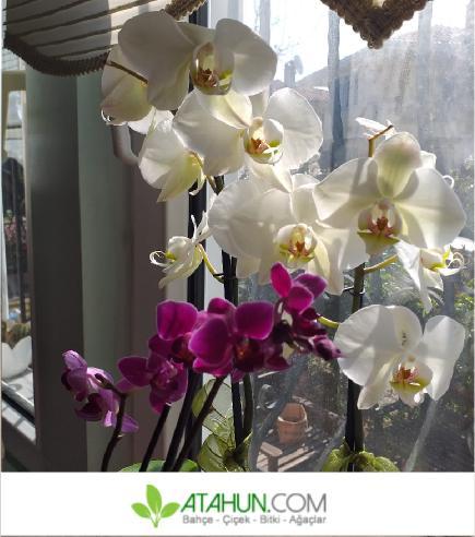 evde saksı bitkileri bakımı