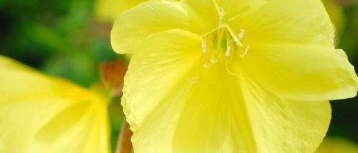 güzel kokulu bitkiler