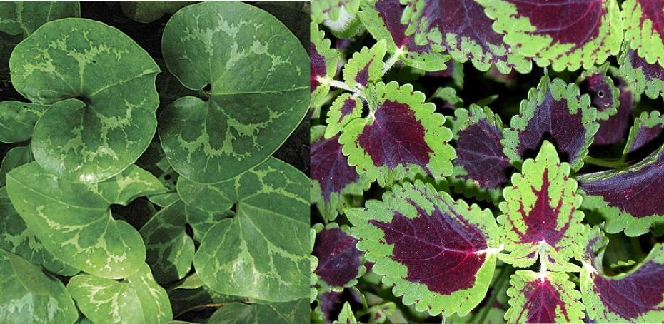 gölgede yetişen bitki çeşitleri nelerdir