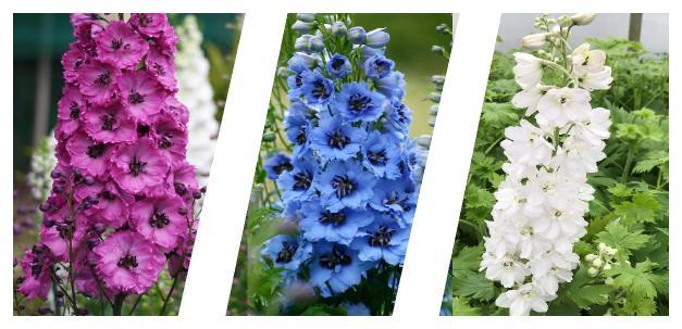 hazeran çiçeği faydaları