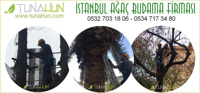 istanbul ağaç budama fiyatları