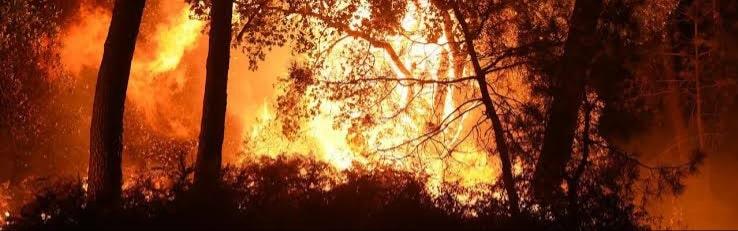 izmir orman yangınında yanan ağaçlar