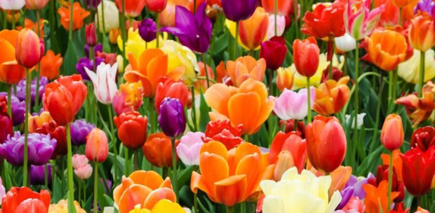 kesme çiçek çeşitleri nelerdir