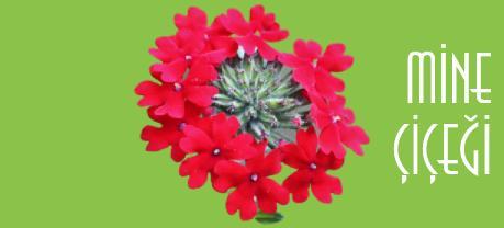 kırmızı mine çiçeği