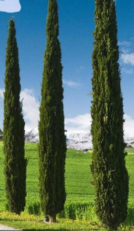 mezarlığa dikilecek ağaç