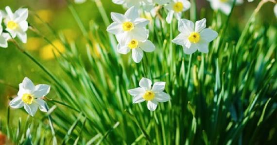 mezarlık çiçekleri