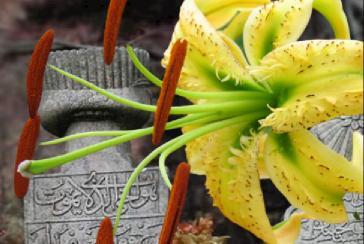 mezarlıklara ekilecek çiçek isimleri