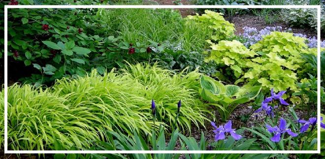 peyzajda kullanılan yer örtücü bitkiler