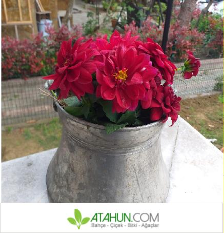 saksı çiçekleri resimleri