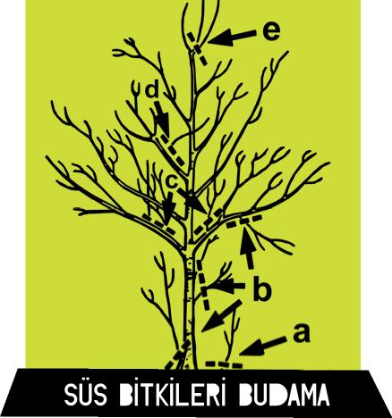 süs bitkileri nasıl budanır