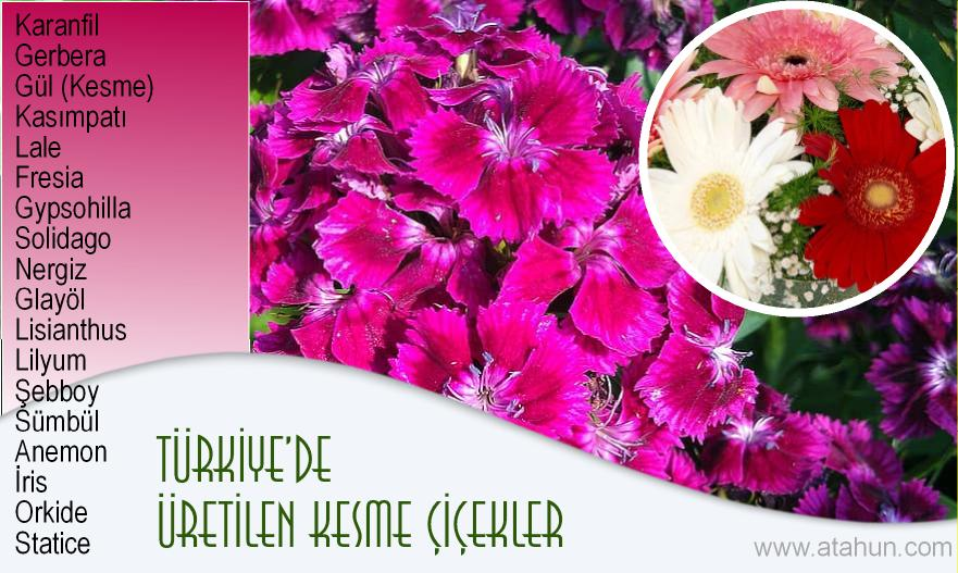 türkiyede yetişen kesme çiçek isimleri