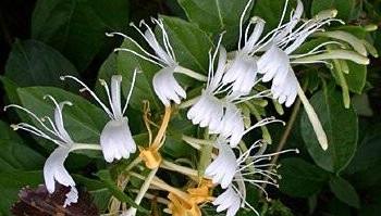 uzun süre çiçekli kalan bitkiler