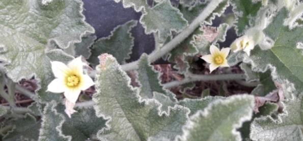 Botanik bitki nedir