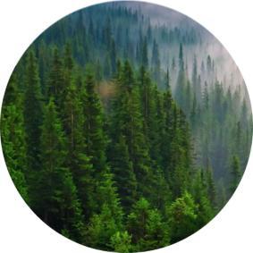 En Çok Ormanı Olan Ülke İsimleri, Dünyada en çok hangi ülkenin ormanı vardır