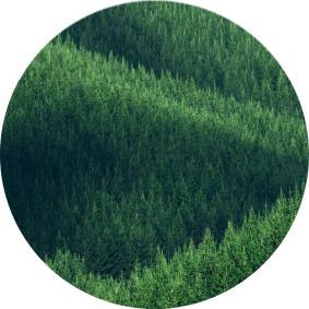 En Çok Ormanı Olan Ülke