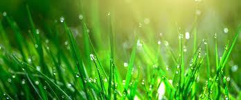 Kış Mevsiminde Çim Bakımı, Yaz Mevsiminde Çim Bakımı, Sonbahar Mevsiminde Çim Bakımı, Yaz Mevsiminde Çim Bakımı, Mevsimsel Çim bakımı nasıl yapılır