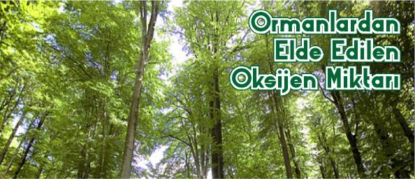 Ormanlardan Elde Edilen Oksijen Miktarı