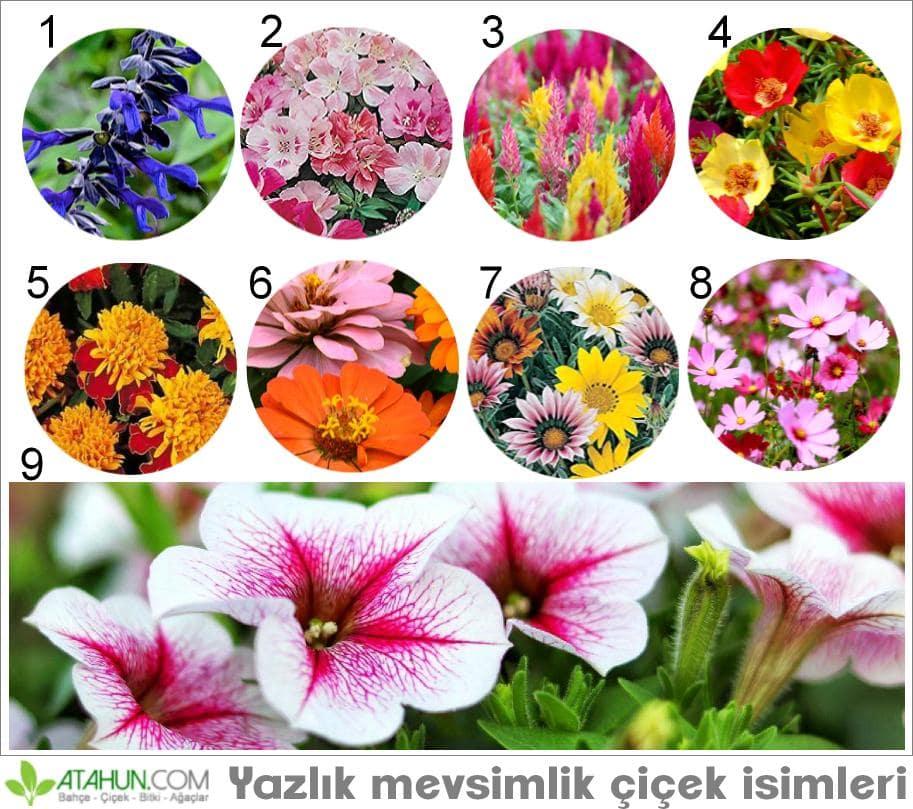Yazlık mevsimlik çiçek isimleri ve resimleri
