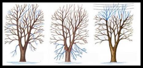 bir ağaç nasıl budanır