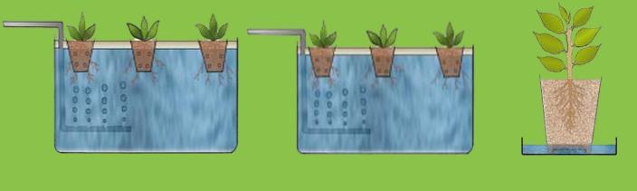 daldırma tekniği ile bitki çoğaltma