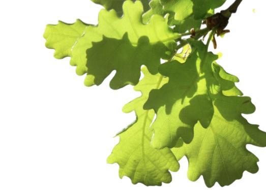 geniş yapraklı ağaç isimleri