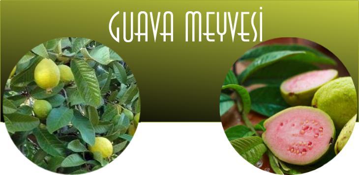 guava meyveleri