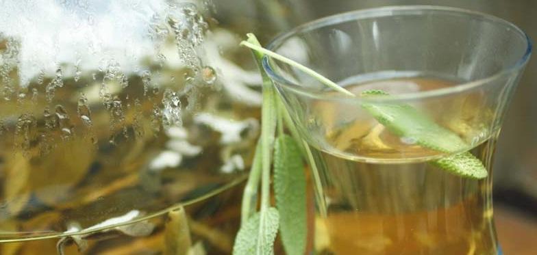 hatay aromatik bitkiler